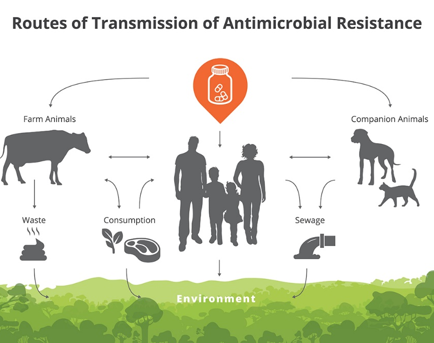 Possible routes of Transmission of Antimicrobials Resistance